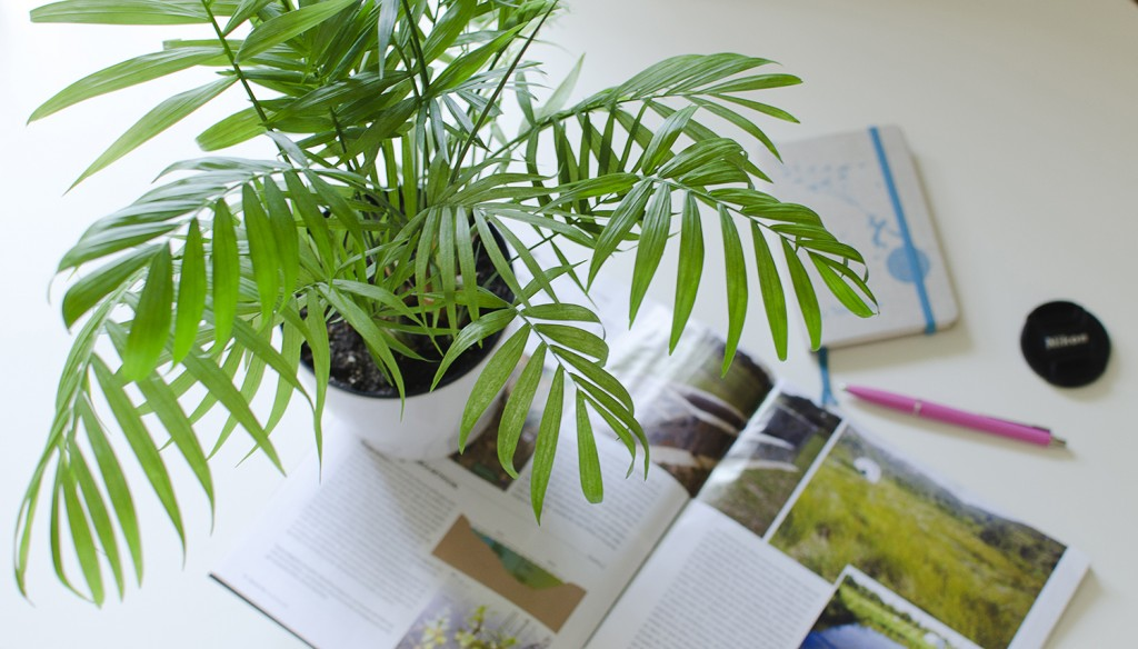 Easy to take care of indoor plants roselawnlutheran for Easy to take care of outdoor plants
