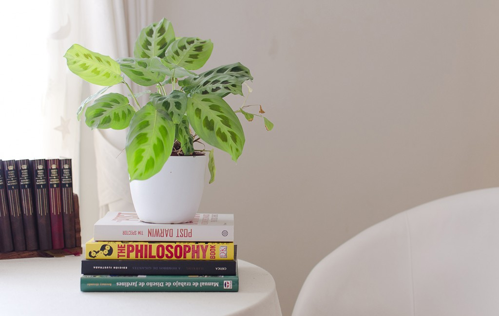 Five easy care indoor plants al fresco for Easy care indoor plants