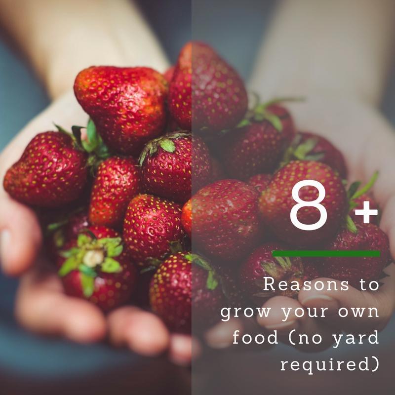 grow food pin