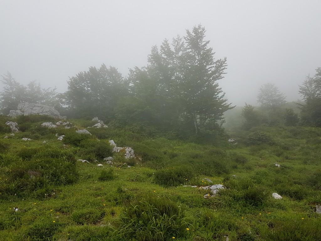 La niebla empezaba a disiparse.