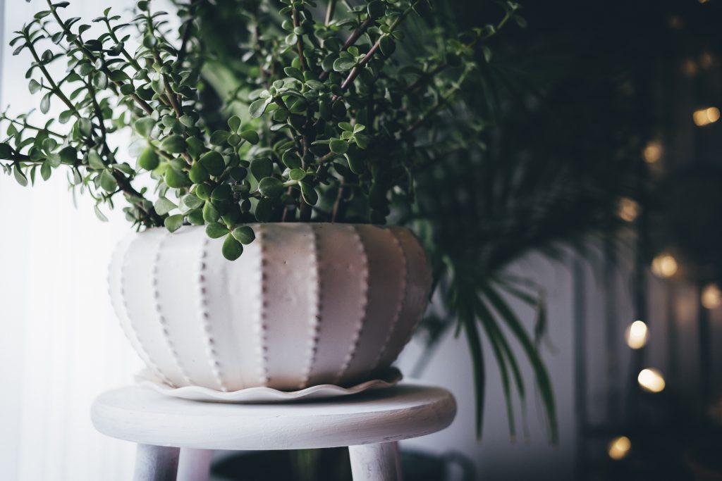 fancy pot