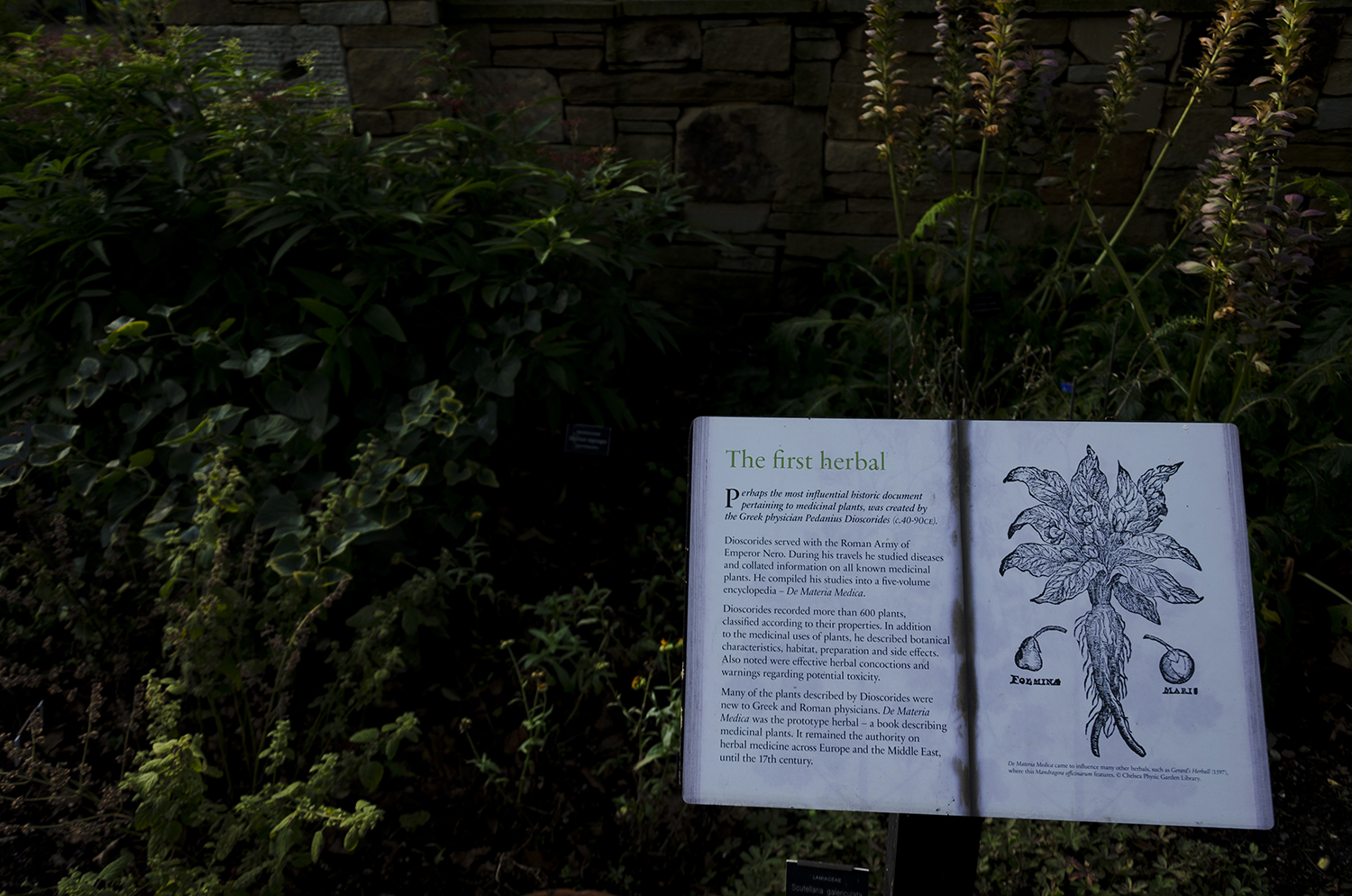 The Chelsea Physic Garden, a secret place in London