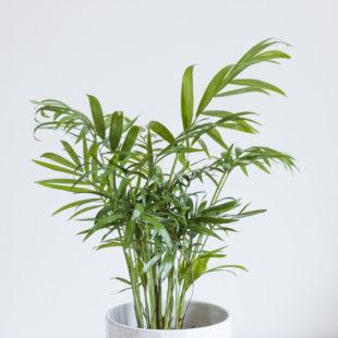 5 plantas de interior que aguantarán un poco de abandono durante las vacaciones